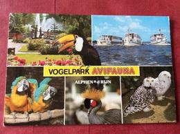 Nederland Vogelpark Avifauna ( Vogels Oiseaux Birds ) - Vogels