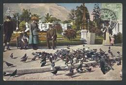 +++ CPA - Monaco - Jardins De MONTE CARLO - Les Pigeons Sur La Place Du Casino  // - Monte-Carlo
