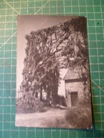 Elsenborn. Carte-photo. Vers 1920 - Elsenborn (Kamp)
