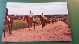 CPSM CHEVAL CHEVAUX HORSES RECEHORSES AT EXERCISE ON THE HEATH NEWMARKET 1976 - Cavalli