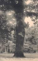 91 22 SOISY SOUS ETIOLLES Forêt De Sénart Chêne De La Croix De L'Hermitage 6m50 De Circonférence - France