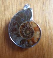 Pendentif Ammonite Montée Sur Métal Blanc Sans Poinçon  Anneau & Bélière TBE - Autres