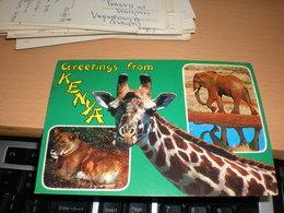 Greetings From Kenya Kenya Aiir Mail - Girafes