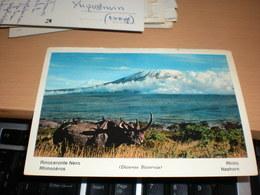 Rhino Kenya Kenya Aiir Mail - Rhinocéros