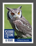 SIERRA LEONE 2018 - White Faced Owl, 1v. Definitive Stamps - Pájaros