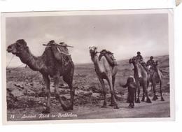 JORDANIE JORDAN Camels Chameaux Ancienne Route A Bethleem Stamps Kingdom Of Jordan - Jordanie