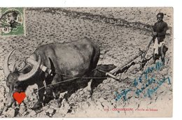 01371-LE-COCHINCHINE-Buffle Au Labour------------animée - Cartes Postales