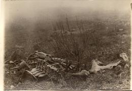 PHOTO ALLEMANDE - OSSEMENTS DE CHEVAUX AU FORT DU CAMP DES ROMAINS PRES SAINT MIHIEL - MEUSE GUERRE 1914 1918 - 1914-18