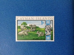 CAYMAN ISLANDS 1 D FAUNA ANIMALI MUCCHE TORI BRAHMIN CATTLE FRANCOBOLLO NUOVO STAMP NEW MNH** - Cayman (Isole)