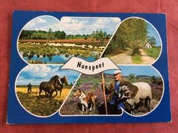 Nederland Nunspeet. ( Paard Schaap Hond Boer ) - Paarden