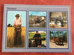 Nederland Nunspeet. ( Boer Paard Schaap ) - Landbouwers