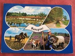 Nederland Nunspeet. ( Boer Paard Schaap Hond ) - Landbouwers