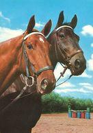 HORSES / PFERDE / CHEVAUX /     POSTCARD UNUSED  ( H  5120 ) - Pferde