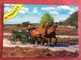 Nederland Nunspeet. ( Boer Paard  ) - Paarden