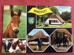 Nederland Nunspeet. ( Boer Paard  Veulen Schaap Koe Hond ) - Paarden