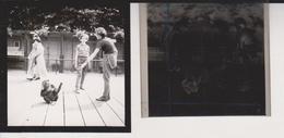 Chimpanzee Foto + Celluloid Negatives, Of Various Animals, Big Cats, Birds, Zoo, Bears, Monkeys Mono Aap - Fotos