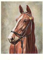 HORSES / PFERDE / CHEVAUX /     POSTCARD USED  ( H  5128 ) - Pferde