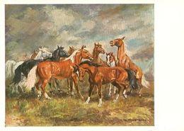 HORSES / PFERDE / CHEVAUX /     POSTCARD UNUSED  ( H  5129 ) - Pferde