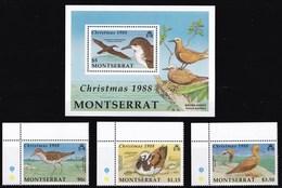 MONTSERRAT 1988 UCCELLI - Montserrat