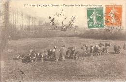 Dépt 89 - SAINT-SAUVEUR-EN-PUISAYE - Vue Prise De La Route De Moutiers - (MOUTONS) - Blin Et Mouchon, édit. N° 717 - Saint Sauveur En Puisaye