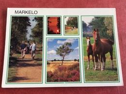 Nederland  Markelo ( Paard ) - Paarden
