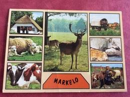 Nederland  Markelo ( Paard Schaap Lam Koe Hert Everzwijn Hond Haflinger ) - Dieren