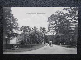 AK WELTEVREDEN Ca.1910 Indonesia Java  //  D*36173 - Indonesien