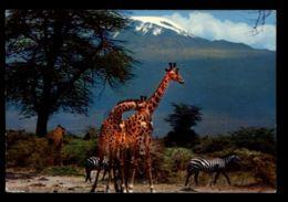 C565 EAST AFRICAN WILDLIFE - GIRAFFE TANZANIA 1970 - Girafes