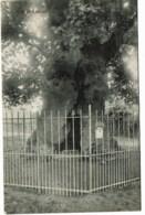 Liernu - Le Vieux Chêne - Eghezée