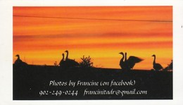 Photos By Francine, Comeauville NS (VC511) - Visiting Cards