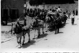 11 - Pennautier - Fete De La Moisson 1942 - Attelage De 3 Cheveau Blancs - Pompe Esso - Photo Rougé Carcassonne - Lieux