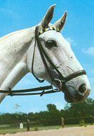 HORSES / PFERDE / CHEVAUX /  POSTCARD  UNUSED  ( H  5147 ) - Pferde