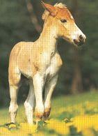 HORSES / PFERDE / CHEVAUX /  POSTCARD  UNUSED  ( H  5148 ) - Pferde
