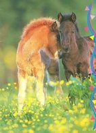 HORSES / PFERDE / CHEVAUX /  POSTCARD  UNUSED  ( H  5149 ) - Pferde