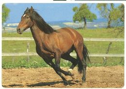 HORSES / PFERDE / CHEVAUX /  POSTCARD  UNUSED  ( H  5154 ) - Pferde