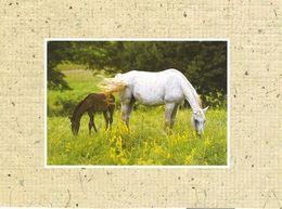 HORSES / PFERDE / CHEVAUX /  POSTCARD UNUSED  ( H  5156 ) - Pferde