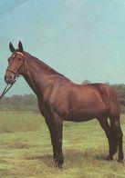 HORSES / PFERDE / CHEVAUX /  POSTCARD UNUSED  ( H  5159 ) - Pferde