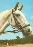 HORSES / PFERDE / CHEVAUX /  POSTCARD UNUSED  ( H  5160 ) - Pferde