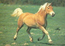 HORSES / PFERDE / CHEVAUX /  POSTCARD UNUSED  ( H  5161 ) - Pferde