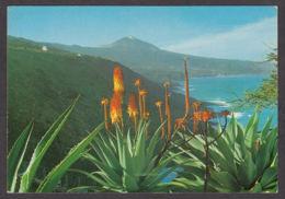 87371/ TENERIFE, Flores Y Teide - Tenerife