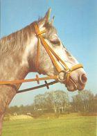 HORSES / PFERDE / CHEVAUX /  POSTCARD UNUSED  ( H  5168 ) - Pferde