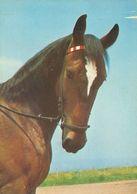 HORSES / PFERDE / CHEVAUX /  POSTCARD UNUSED  ( H  5173 ) - Pferde