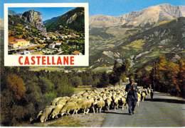 TROUPEAU DE MOUTONS - 04 CASTELLANE : Bon Plan - CPM GF Flock Of Sheep -Schafherde - Kudde Schapen - Gregge Di Pecore - - Castellane
