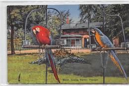 Basel Zoolog. Garten Papagei - Zoo - BS Bâle-Ville