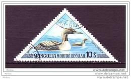 Mongolie, Mongolia, Canard, Triangle, Oiseau, Oiseaux, Bird, Birds, Duck - Ducks