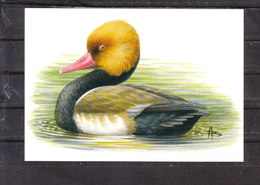 Buzin Nette Rousse - 1985-.. Oiseaux (Buzin)