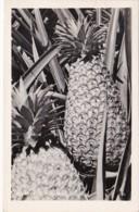 Hawaii Honolulu Pineapples 1948 Real Photo - Honolulu