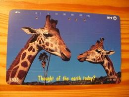 Phonecard Japan 231-047 Giraffe - Japan