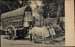 Cp Colombo Ceylon Sri Lanka, Double Bullock Carts, Lipton Tee, Ochsengespann - Sri Lanka (Ceylon)