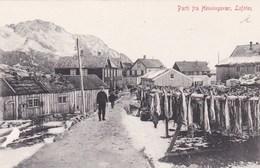 Norvège - Norway - Norge - Parti Fra Henningsvaer, Lofoten - Pêche Pêcheries Saleries Poissons Séchage Morue - Norvège